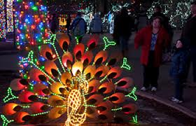 zoo lights denver zoo kids fun at halloween